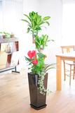 観葉植物 寄せ植え 8号 ※黒角高陶器鉢(角皿付)