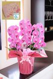 【電報・祝電付き】胡蝶蘭3本立(ピンク) 2万円コース ※台紙:ピンク