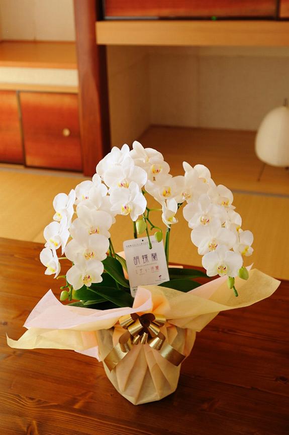 <p>母の日や長寿のお祝いに、可愛らしい贈り物で大変喜ばれます。</p>