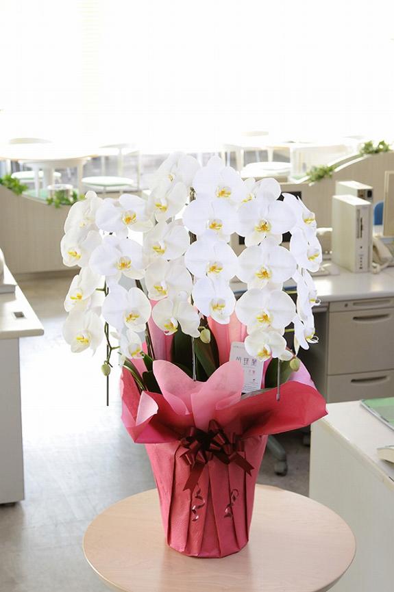 <p>オフィス内に置けば、明るさもひときわ・・・事務所の雰囲気を華やかに変えてくれます。</p>