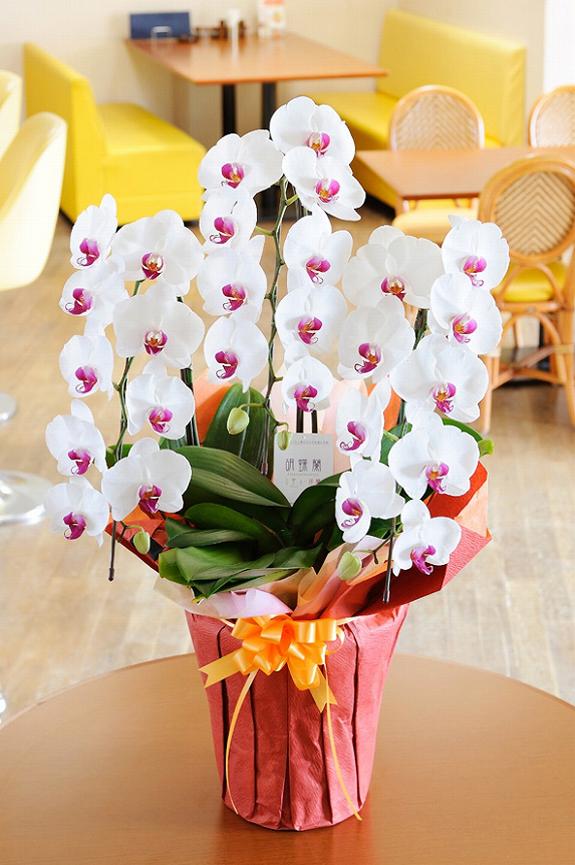 <p>開店祝いに人気のサイズ!より華やかに飾りたい場合に。<br /> お花はたくさん届きますが、ほとんどが白なのでリップは目立ちます。<br /> </p>