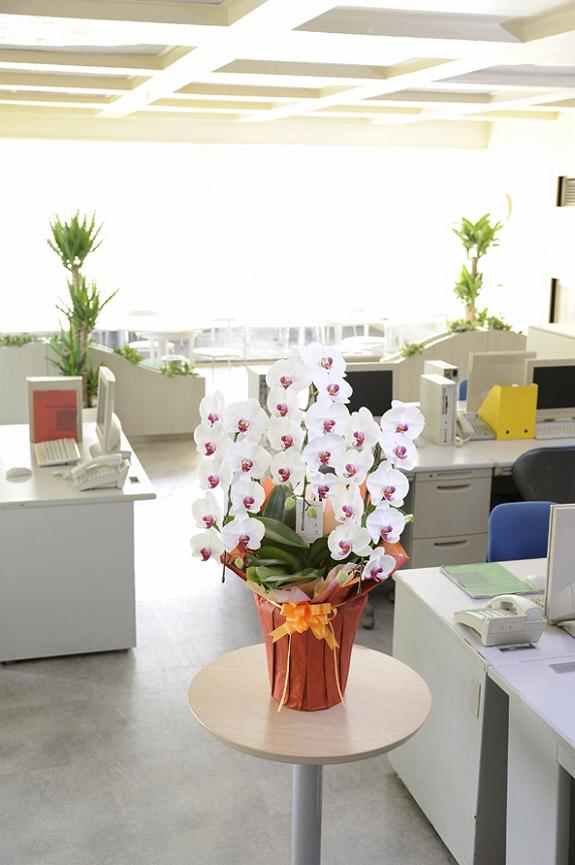 <p>オフィス内に置けば、明るさもひときわ・・・事務所の雰囲気を華やかに変えてくれます。<br /> ※立札も無料でお付けしています。</p>