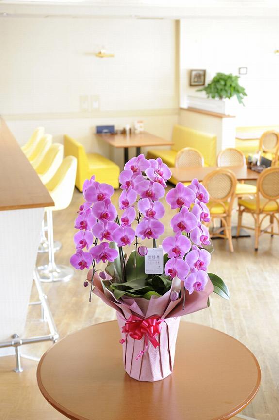 <p>開店祝いに人気のサイズ!より華やかに飾りたい場合に。<br /> お花はたくさん届きますが、ほとんどが白なのでピンクは目立ちます。</p>