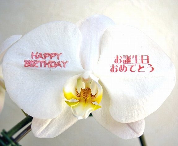 <p>花びらに伝えたい言葉を入れて、世界に一つだけのオリジナル胡蝶蘭を制作いたします!お相手のお名前だってOKです!</p>