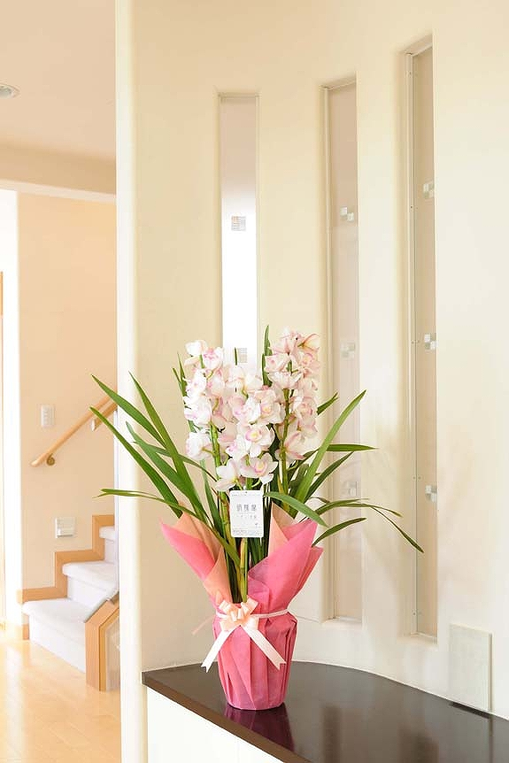 <p>こちらは冬の洋蘭「シンピジューム」、ピンクや黄色など色々な色合いがございます。</p>