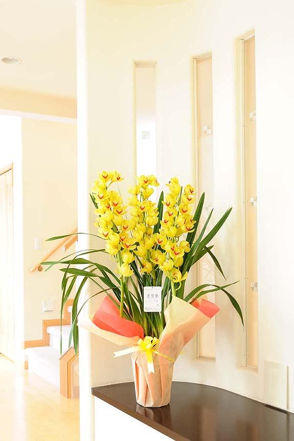 <p>冬を彩る洋蘭シンビジューム!高さがあるため贈り物としての見栄えにも最適です。</p>