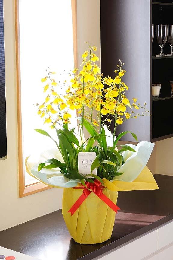 <p>こちらは通年OKの「オンシジューム」、黄色で暖かみのあるのが特徴です。</p>