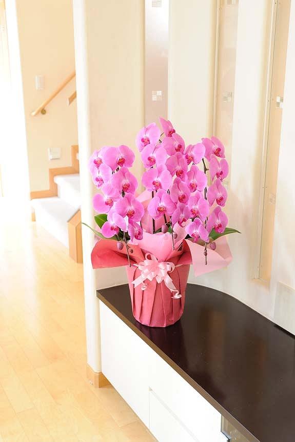 <p>ラズベリーピンクの胡蝶蘭はシンプルな場所ほど際立った見栄えします。</p>