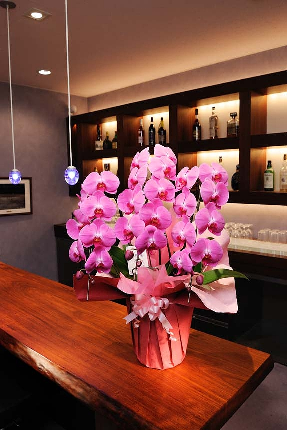 <p>開店祝い、開業祝いに1ランク上の胡蝶蘭をお届けします。</p>
