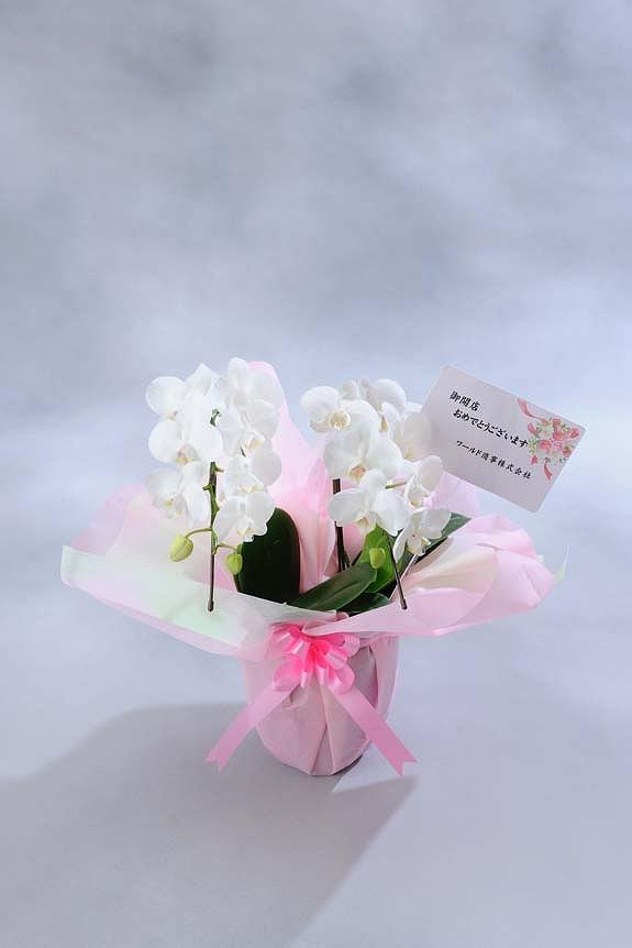 <p>ミディはお花が小さいのでメッセージカードのみがお付けできます。<br /> ※文書は30文字程度までメッセージの記載が可能です。最後に贈り主のお名前を忘れずに・・・<br /> </p>
