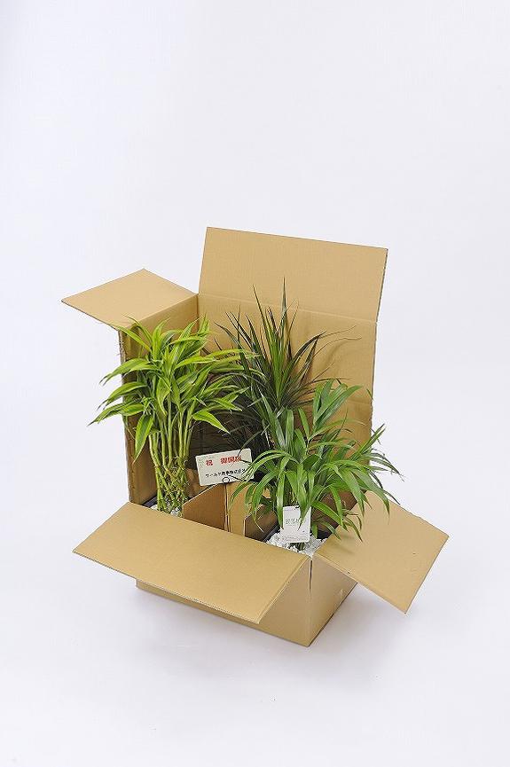 <p>厳重な梱包にて発送しておりますのでご安心ください。<br /> ※写真は3個入り梱包の見本です。</p>