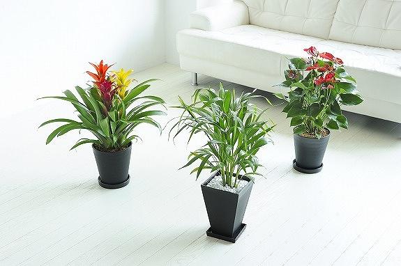 <p>贈られた方は、置く場所によってお花をお選びいただけます。</p>