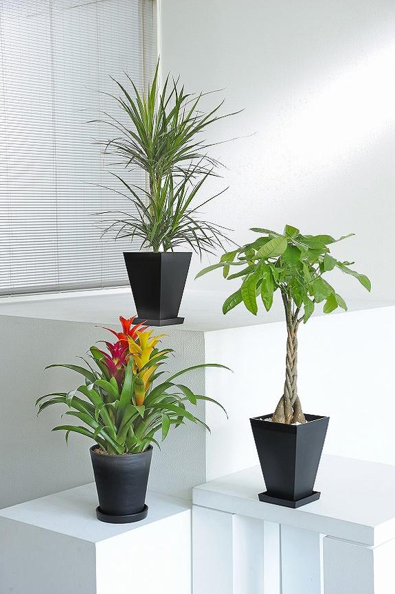 <p>お色付きの観葉植物1鉢とグリーン系観葉植物2鉢のセット商品!</p>