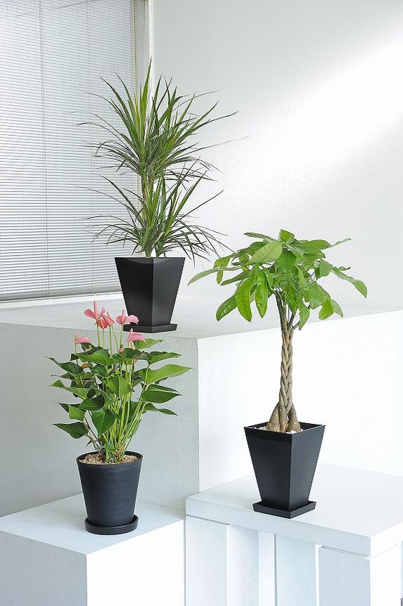 <p>リーン系観葉植物の他、見栄えのするカラフルなお花をおひとつお入れしています。</p>