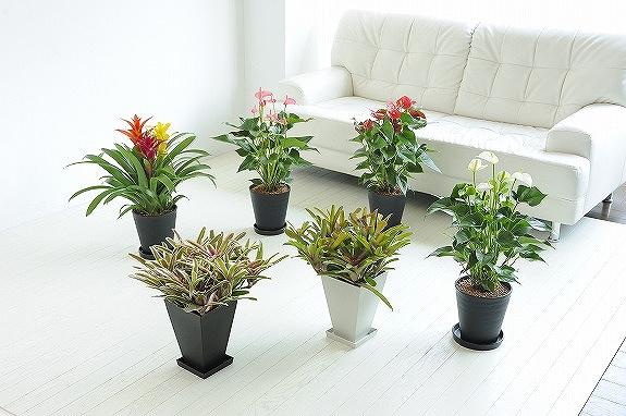 <p>インテリアにボリューム感を出す贈り物にするなら、こちらの観葉植物の複数セットはおすすめです。</p>