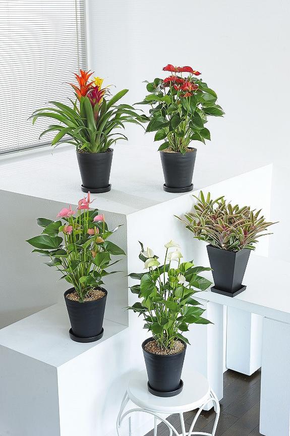 <p>葉や花のお色が楽しめるカラフルな観葉植物6号鉢サイズの5個セット!</p>