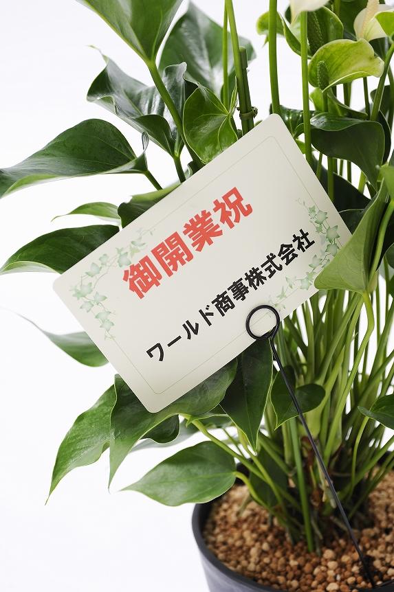 <p>6号~7号鉢までの観葉植物は、メッセージカードを無料でお付けできます。<br /> ※文書やお祝の文言を30文字程度まで記載することが可能です。最後に贈り主のお名前を忘れずに・・・</p>