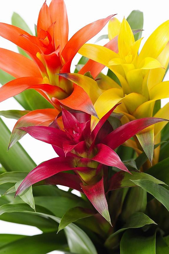 <p>見栄えのするカラフルなお花を3つセットにしております。※種類の指定は承れません。</p>