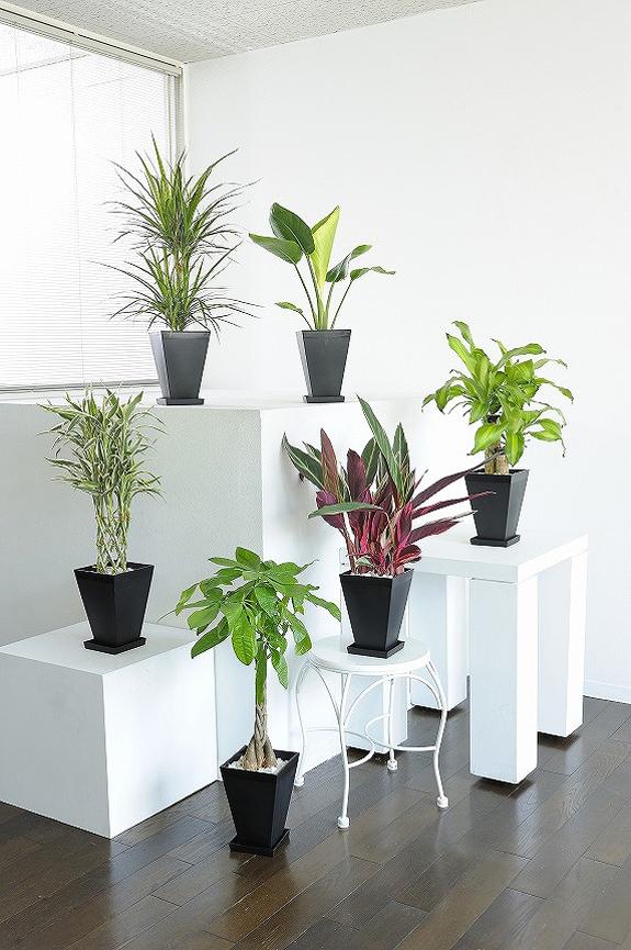 <p>観葉植物の6号鉢サイズを生産者おまかせで6鉢お届け!<br /> ※掲載中の写真は見本で、おまかせ商品のため同じものが送られるわけではございません。</p>