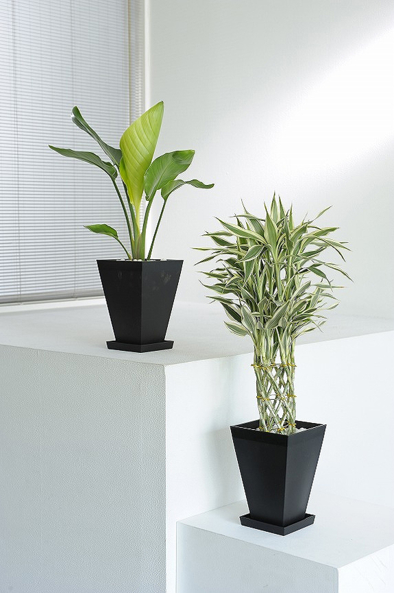 <p>観葉植物の6号鉢サイズを生産者おまかせで2鉢お届け!<br /> ※掲載中の写真は見本で、おまかせ商品のため同じものが送られるわけではございません。</p>