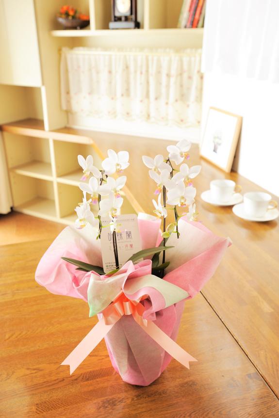 <p>母の日や敬老の日など、ちょっとしたお祝いや女性へのプレゼントにとってもおすすめ!</p>