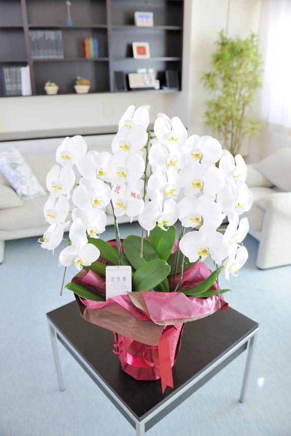 <p>使用する胡蝶蘭のタイプはこちらと同規格のものです。お色は白のみ合計21輪以上(つぼみ含む)となります。<br /> ※写真中央の一番下にメッセージが入っており、こんな感じになります。</p>