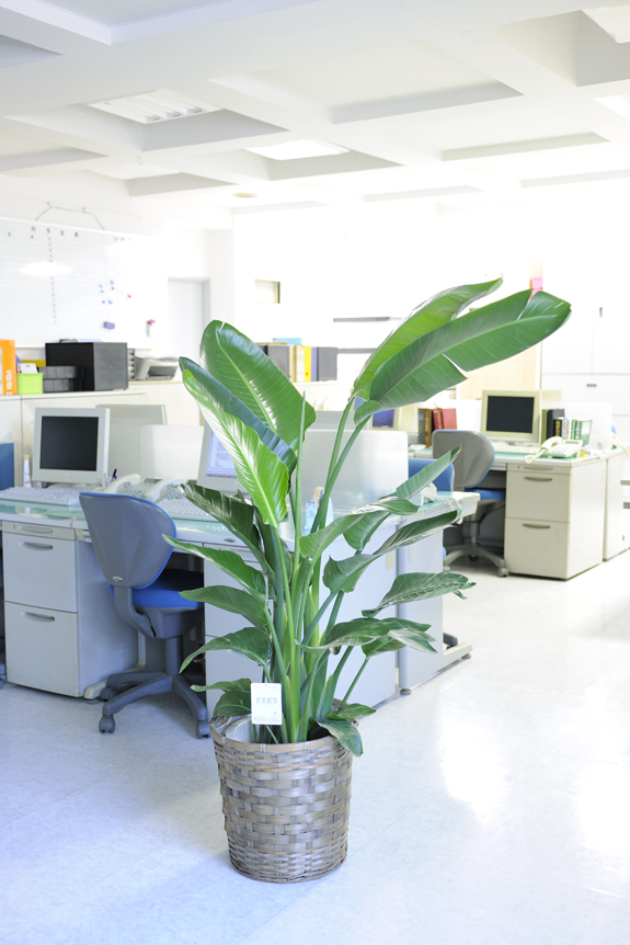 <p>オフィスにおいてもシンプルな感じで喜ばれます。<br /> </p>