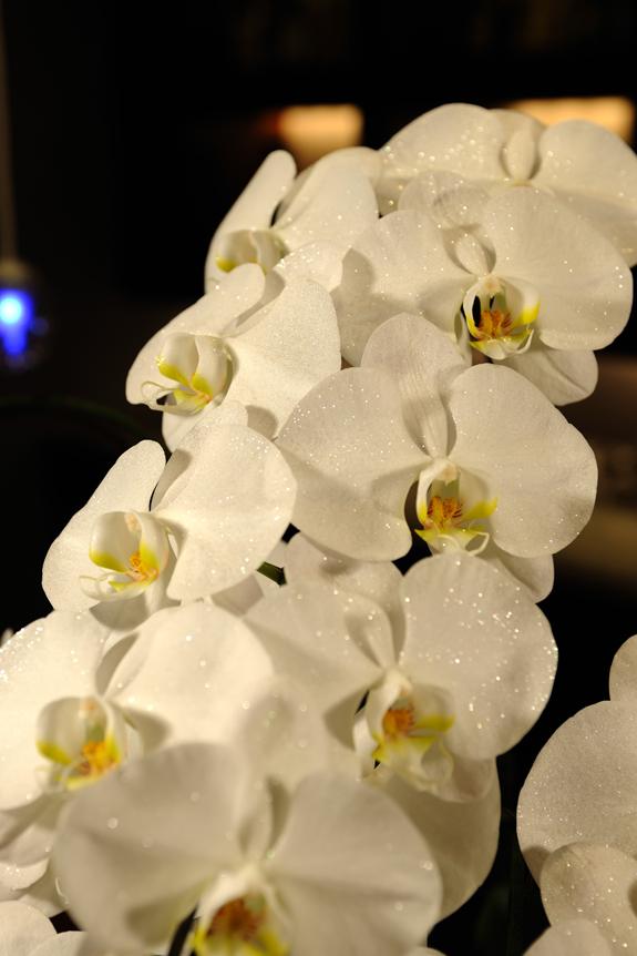 <p>ジュエリーのようにキラキラとした輝きを放つ胡蝶蘭、「ダイヤモンドオーキッド」です</p>