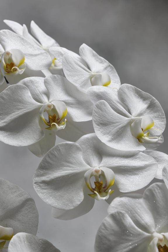 <p>ラメから反射した光がキラキラと輝きを放つ、ジュエリーのような胡蝶蘭。</p>