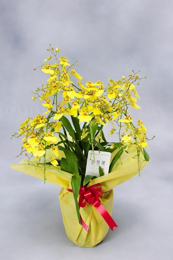 <p>「アーチ仕立て」は胡蝶蘭のように、お花の枝を前方にしならせた状態のお仕立てとなっております。</p>