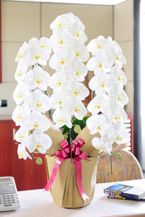 <p>「一般生花店で3万円以上商品を、2万円の予算で実現!」</p>