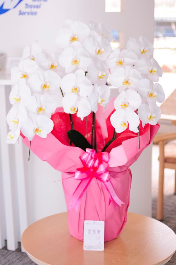 <p>母の日や還暦祝い、長寿祝いのプレゼントにも大変喜ばれます。</p>