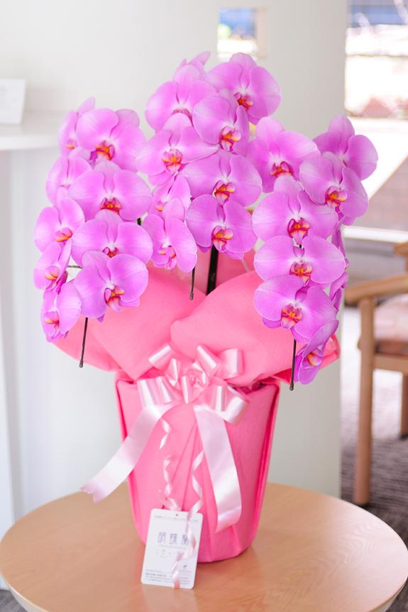 <p>母の日のプレゼントや新築祝いにも良いサイズです!</p>