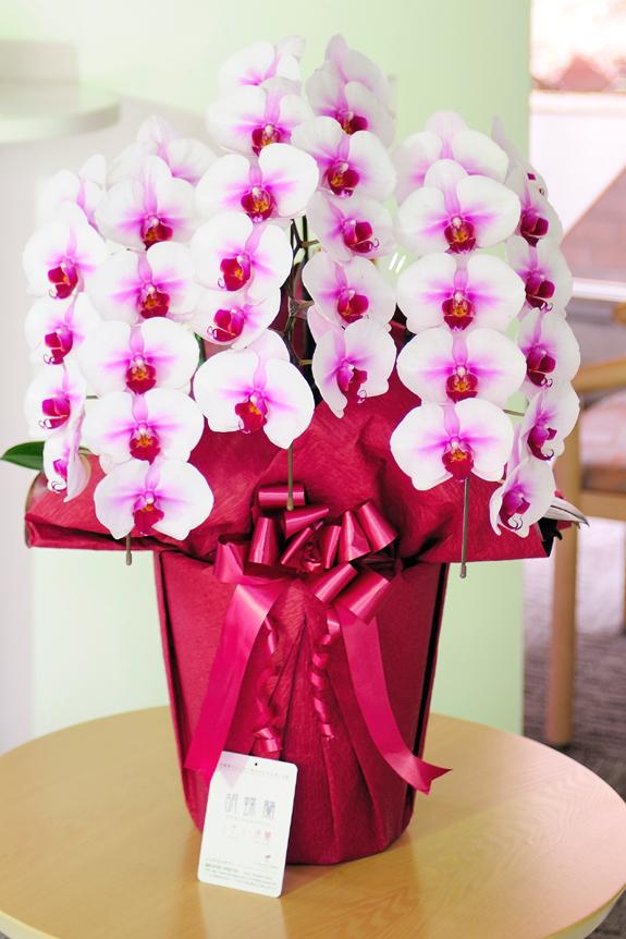 <p>母の日や還暦祝い、長寿祝いのプレゼントにも大変喜ばれます。<br /> オフィスの受付に置くとこんな感じでした。</p>
