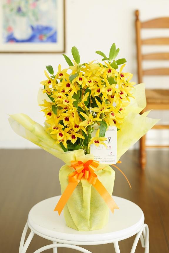 <p>黄色系のデンドロビュームは元気で明るい雰囲気を演出してくれます。</p>
