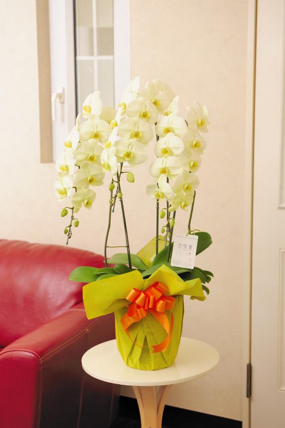 <p>お花は鮮やかなで暖かみある色彩となり、企業間のお付き合いや大切な方へのフラワーギフトとして贈り物にもおすすめです。</p>