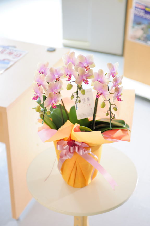<p>明るくにぎやかなプレゼントにしたい方にはカラフルなミニ胡蝶蘭を!</p>