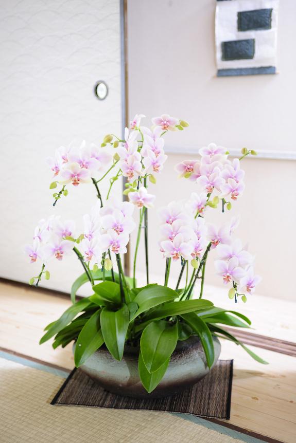 <p>和室、洋室問わずお楽しみ頂けるデザインとなっております。</p>