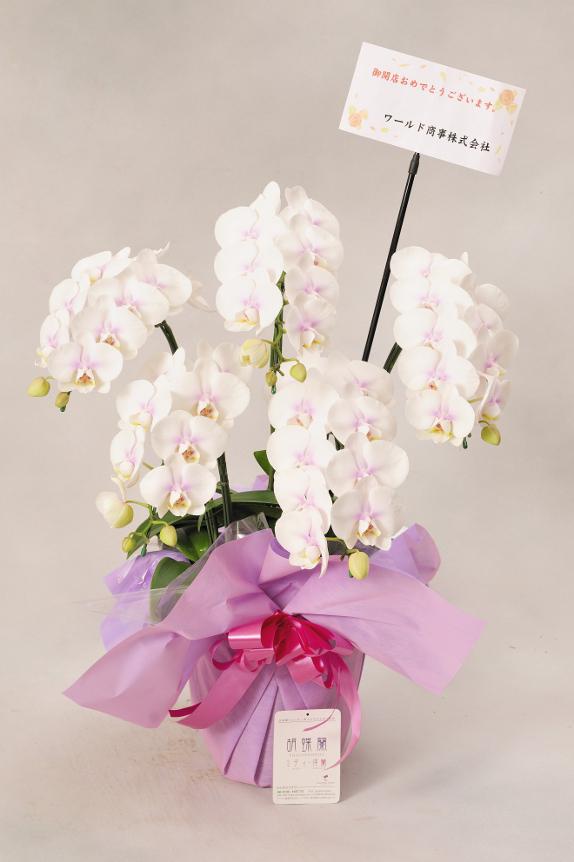 <p>お花には立札(紙札)またはメッセージカードがお付けできます。最後に贈り主のお名前を忘れずに・・・</p>