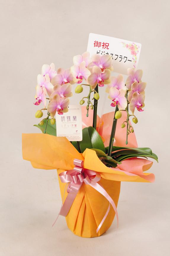 <p>ミディはお花が小さいのでメッセージカードのみがお付けできます。<br /> ※文書は30文字程度までメッセージの記載が可能です。最後に贈り主のお名前を忘れずに・・・</p>