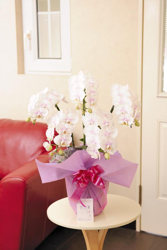 <p>ご開店やご開業のなど企業間でのお祝い花や、個人のちょっとしたお祝いにもご利用頂けるサイズとなっております。</p>