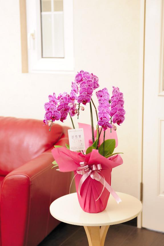 <p>チャンシンバイオリンは鮮やかなピンクの花びらに斑点状の模様が散りばめられた珍しいお花です。</p>