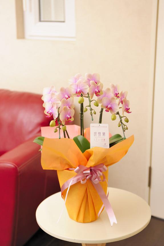 <p>トロピックジュエリーは淡いピンクが印象的なお花です。</p>