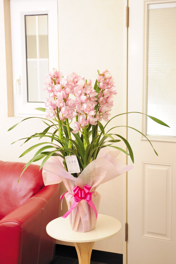 <p>淡い白雪色の花弁と、すくっと真っ直ぐ上に伸びるその姿が気品をうかがわせ、冬の人気品種です。</p>