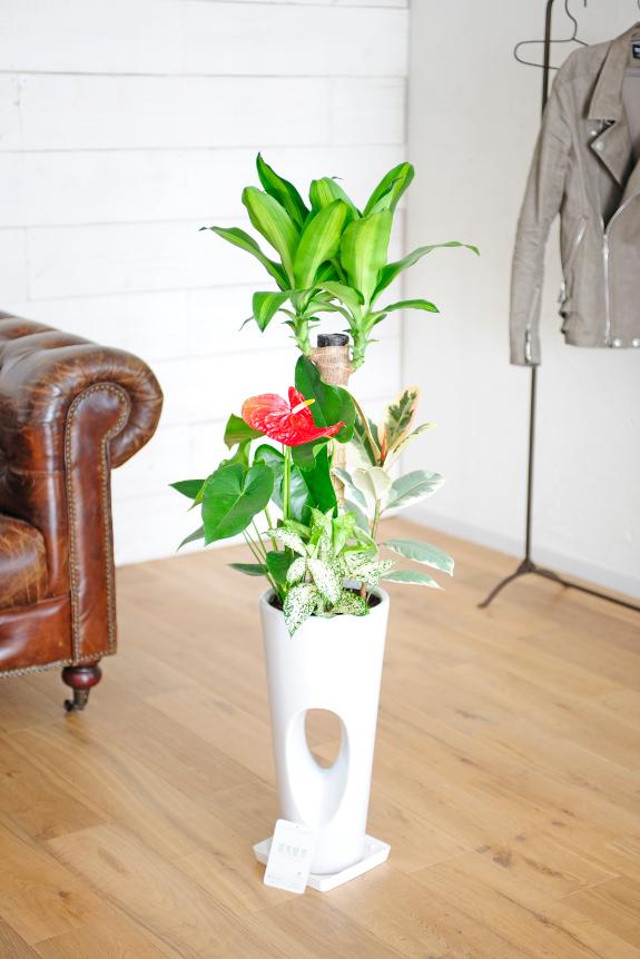 <p>白い陶器鉢は清潔感がありとても人気の商品です。</p>