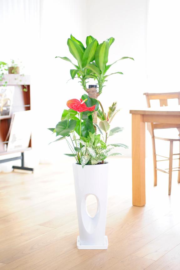 <p>ぽっかり開いた空間が珍しい鉢植えとなります。</p>