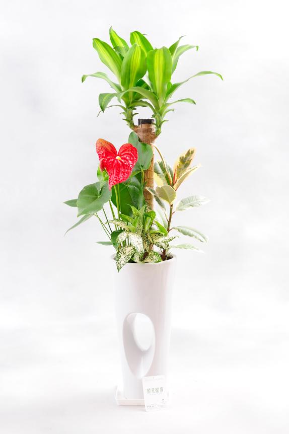 <p>植物は厳選農家より産地直送品をお届け致します。</p>