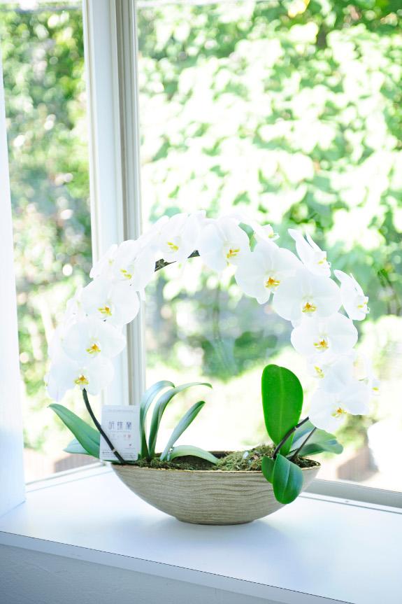 <p>陶器鉢にお仕立てしており、可愛らしい一面とシックな一面の両方を合わせ持つお花となっております。</p>