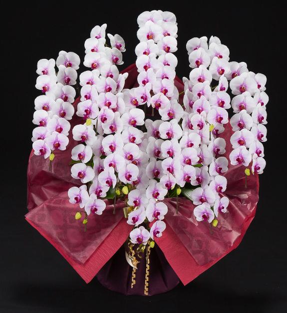 <p>可愛らしいピンクのアクセントが印象的な大型サイズの胡蝶蘭です。</p>