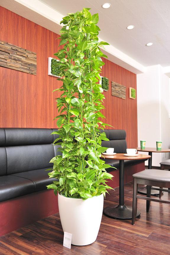 <p>人気の観葉植物ポトスは店舗のインテリアとしてもGood!</p>
